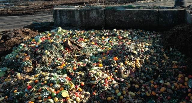 Food Waste at Dump
