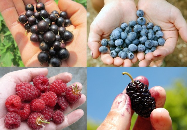 Handfuls of berries